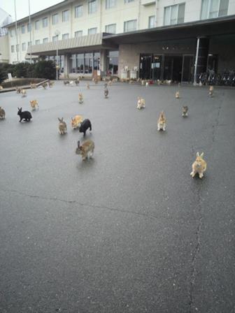 אי הארנבים ביפן