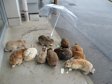ארנבונים ביפן