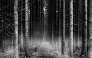 dark-forest-after-dark-24759747-1900-1200