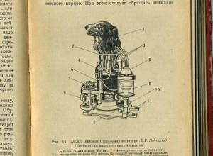 כלבים רובוטיים
