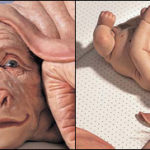 החיות האנושיות של פטרישיה פיצ'יניני