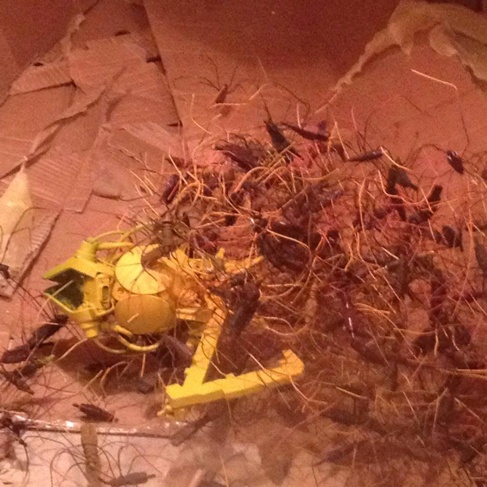 natalie bugs