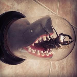 פוחלץ של כריש